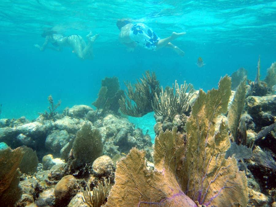 snorkeling charter costa maya