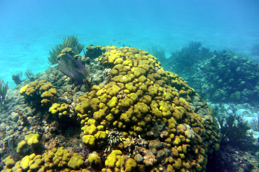costa maya snorkeling