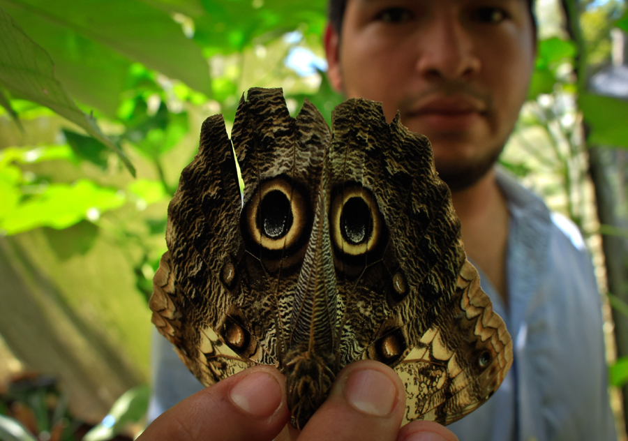 costa maya butterfly farm Excursion